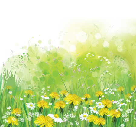 Illustration pour Vector spring, nature background with chamomiles and dandelions. - image libre de droit