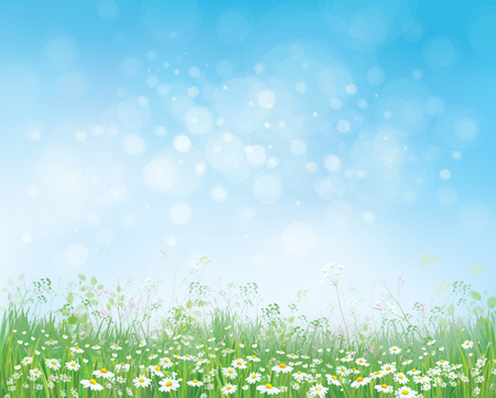 Illustration pour Vector summer nature  background,  blossoming flowers field on blue sky. - image libre de droit