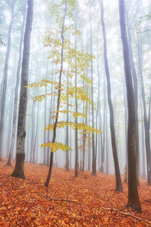 Photo for Autumn landscape in foggy wood with a track - Royalty Free Image