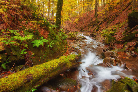 Photo for rapid mountain river in autumn. Colorfull wood background - Royalty Free Image