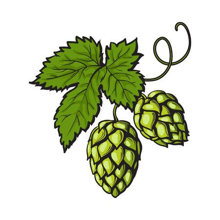 Ilustración de Green hop plant, sketch style vector illustration isolated on white background. Realistic hand drawn ripe green hop cones, beer brewing ingredient - Imagen libre de derechos