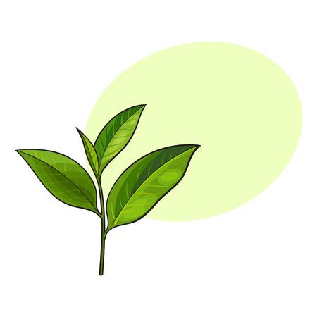 Ilustración de Hand drawn fresh green tea leaf, bud, twig, sketch style vector illustration isolated on white background with speech bubble - Imagen libre de derechos