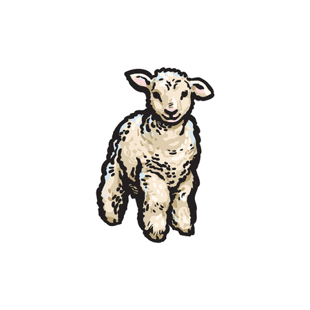 Ilustración de vector sketch cartoon style lamb. Isolated illustration on a white background. Hand drawn animal without horns. Cattle, farm cloven-hoofed livestock animal, wool, lamb products design object - Imagen libre de derechos