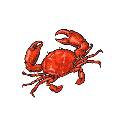 Illustration pour vector sketch cartoon sea crayfish crab. Isolated illustration on a white background. Sea delicacy food concept - image libre de droit