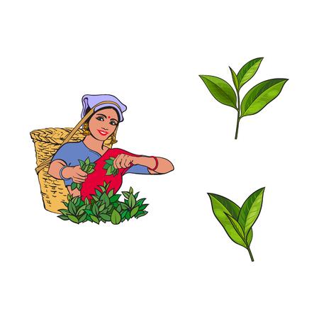 Ilustración de vector sketch cartoon indian Sri-lanka local woman collecting tea in tradition way smiling in big wicker basket, green tea leaves set. Traditionally dressed female character, hand drawn india symbols - Imagen libre de derechos
