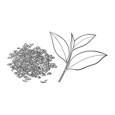 Ilustración de Hand drawn pile, heap, handful of dry tea and fresh young leaf, sketch vector illustration isolated on white background. Realistic hand drawing of dry tea and fresh leaf - Imagen libre de derechos