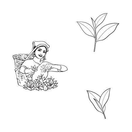 Ilustración de vector sketch cartoon indian Sri-lanka local woman collecting tea in tradition way smiling in big wicker basket, tea leaves set. Traditionally dressed female character, hand drawn india symbols - Imagen libre de derechos