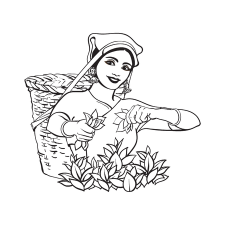 Illustration for vector sketch cartoon indian Sri-lanka local woman collecting tea in tradition way smiling in big wicker basket. Traditionally dressed female character, hand drawn sri-lanka , india symbols - Royalty Free Image