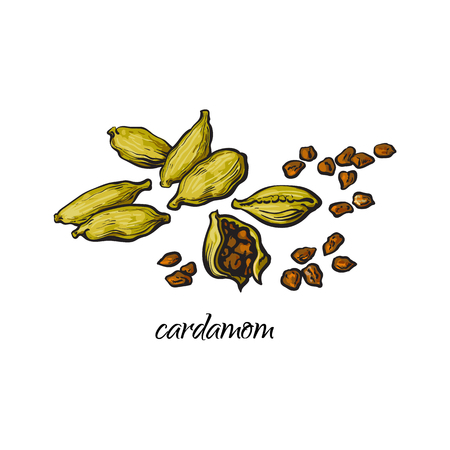 Illustration for Pile, heap of cardamom, cardamon pods and seeds with caption, sketch style vector illustration isolated on white background. Hand drawn pile of cardamom seeds and green pods - Royalty Free Image
