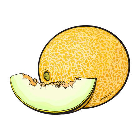Ilustración de Ripe and juicy yellow melon, vector illustration isolated on white background. Drawing of fresh melon, muskmelon, cantaloupe - whole and a slice - Imagen libre de derechos