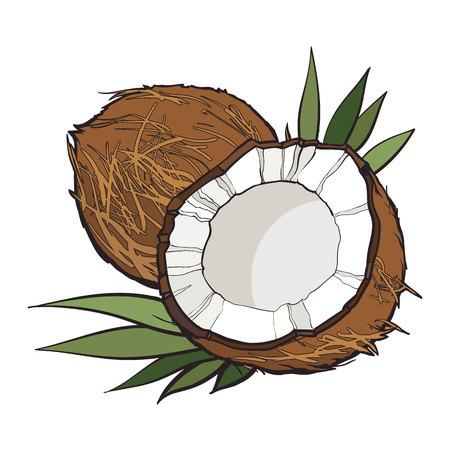 Ilustración de Whole and cracked coconut, vector illustration isolated on white background. Drawing of coconut on white background, delicious healthy vegan snack - Imagen libre de derechos