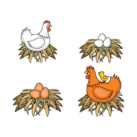 Ilustración de Vector flat poultry farm chicken set. Brown, white hen chickens, eggs in hay nest, yellow small chick sitting at chicken. Isolated illustration, white background. Organic food design - Imagen libre de derechos