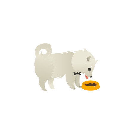 Illustrazione per Cute fluffy little dog eating from bowl, side view portrait, flat cartoon vector illustration isolated on white background. White fluffy dog, puppy character eating food from a bowl - Immagini Royalty Free