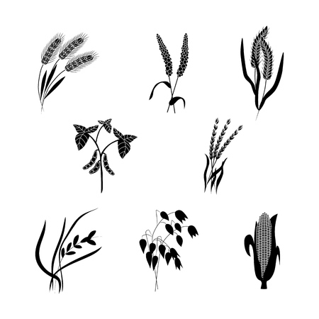 Illustration for Vector corn, wheat ears, oats or barley black silhouette icon set. Organic food, harvest cereal for agricultural product design. Natural heatlhy food full of vitamins and nutritions illustration - Royalty Free Image