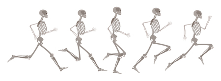 Ilustración de Vector human skeleton in motion set. Running human body in different stages. Scientific and anatomical mockup for education. Skull, bones in action on isolated background. - Imagen libre de derechos