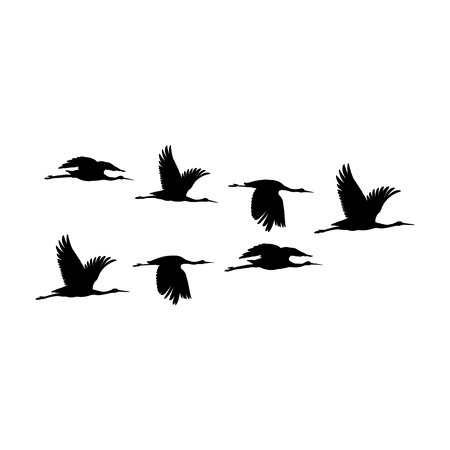 Illustration pour Silhouette or shadow black ink symbol of flock of crane birds or herons flying icon. Group of storks outline template or creative background vector illustration isolated on white. - image libre de droit