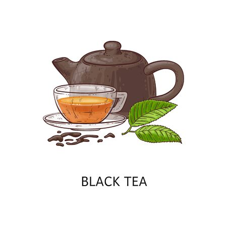Ilustración de Black tea composition drawing - hot herbal drink in glass cup with teapot and green leaves, loose leaf healthy beverage - hand drawn isolated vector illustration - Imagen libre de derechos