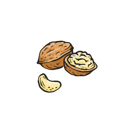 Illustration for Brown walnut drawing isolated on white background - whole and cut in half raw nut for healthy nutrition. Hand drawn sketch food vector illustration. - Royalty Free Image