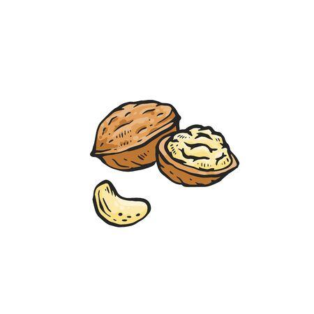 Ilustración de Brown walnut drawing isolated on white background - whole and cut in half raw nut for healthy nutrition. Hand drawn sketch food vector illustration. - Imagen libre de derechos