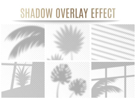 Illustration for Set of transparent tropical leaves and window shadow overlay effects, realistic vector illustration isolated on transparent background. Natural lighting for branding. - Royalty Free Image