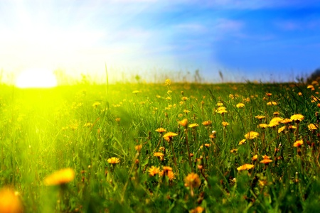 Photo pour beautiful summer landscape with dandelions in foreground - image libre de droit