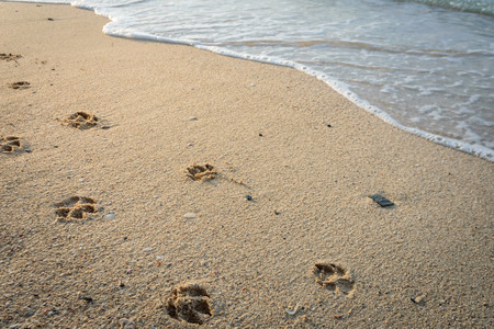 Foto de Dog footprints in sand at beach. - Imagen libre de derechos