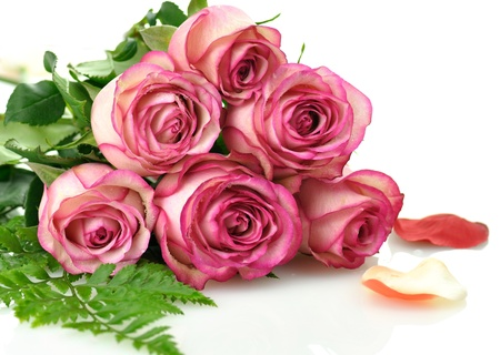 Photo for pink roses  - Royalty Free Image