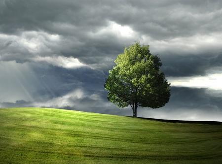 Photo pour Single tree on the hill - image libre de droit