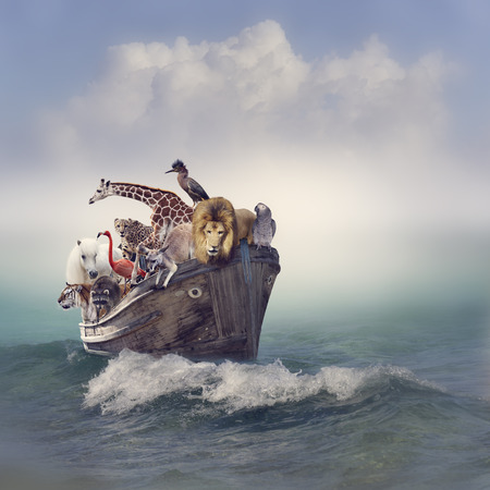 Photo pour Wild Animals and Birds in an Old Boat - image libre de droit