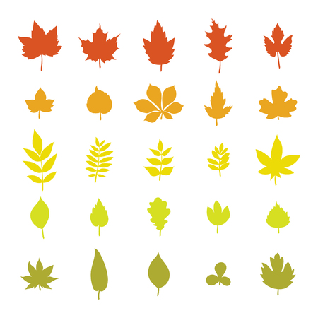 Illustration for Set of colorful autumn leaves. Leaf collection isolated on white background. Vector illustration - Royalty Free Image