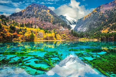 Photo for Amazing view of crystal clear water of the Five Flower Lake (Multicolored Lake) among autumn woods in  Jiuzhaigou nature (Jiuzhai Valley National Park), China. - Royalty Free Image