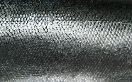Salmon fish scales grunge texture back ground