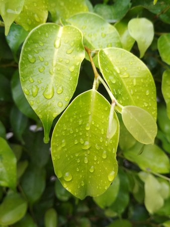 Beautiful green leaf with rain water drops
