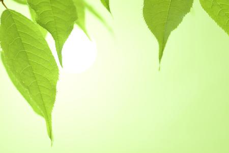 Foto de Fresh green leaf - Imagen libre de derechos