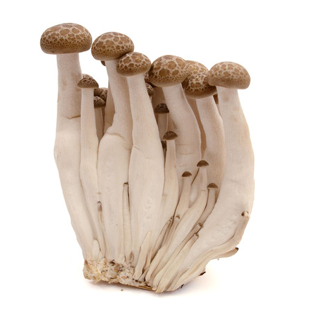 Photo for shimeji mushrooms brown varieties on white background. - Royalty Free Image