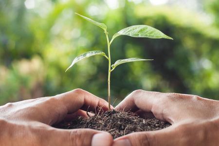 Foto de hands holding and caring a young plant - Imagen libre de derechos