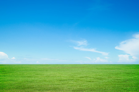 Photo pour Green grass and sky - image libre de droit