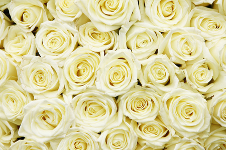 Photo for isolated close-up of a huge bouquet of white roses - Royalty Free Image