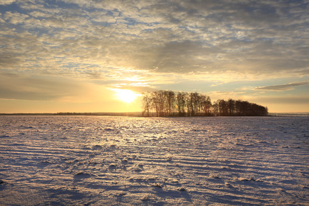 winter landscape colorful sunrise over the snow-covered field