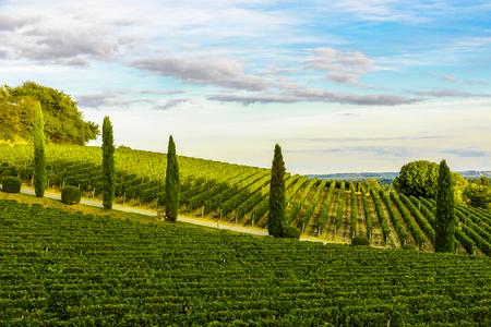 Photo pour Sunset landscape of bordeaux vineyards in Aquitaine region, France - image libre de droit
