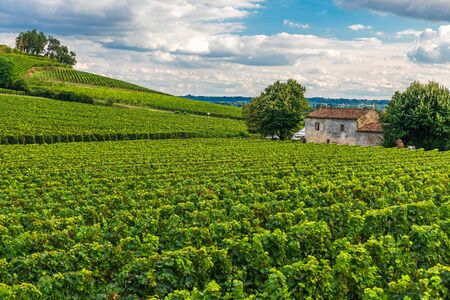 Photo pour Vineyards of Saint Emilion, Bordeaux Wineyards in France in a sunny day - image libre de droit