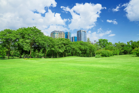 Photo for green grass field in big city park - Royalty Free Image