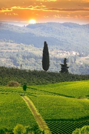 Photo pour Chianti vineyard landscape in Tuscany, Italy - image libre de droit