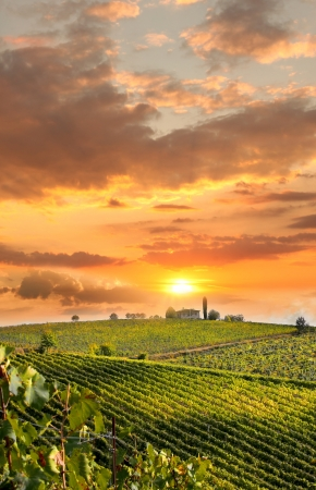 Photo for Chianti vineyard landscape in Tuscany, Italy - Royalty Free Image