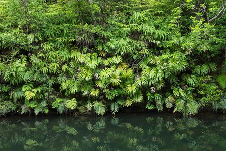Photo for Tranquility of lush green Jungle vegetation - Royalty Free Image
