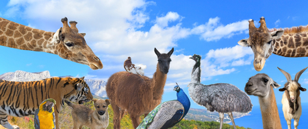 A group of animals are grouped together