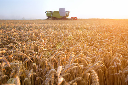 Foto für Combine harvester moving on the field of wheat with beautiful sunset in the background - Lizenzfreies Bild