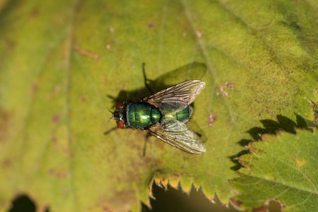 Photo for View of fly sitting on a leaf - Royalty Free Image
