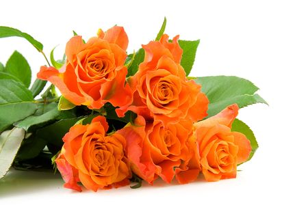 Photo pour Stacked beautiful orange roses over white background - image libre de droit