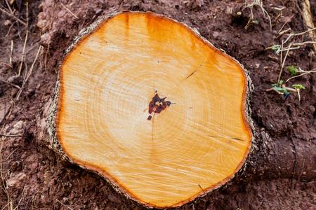 Foto de Top view of  Old tree stump - Imagen libre de derechos